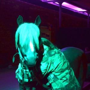 Pferd Mildenberg
